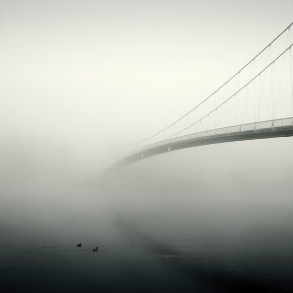 morning-misty-lines